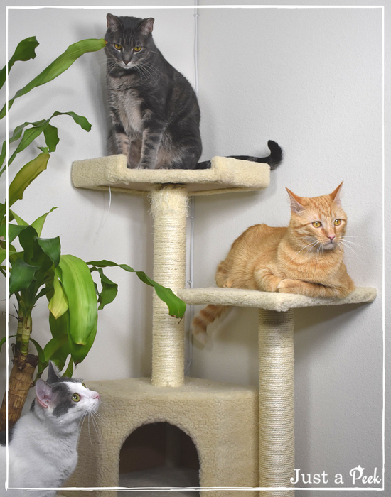 Chewy Cat tree review
