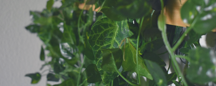 DIY wall decor easy nature plants vine