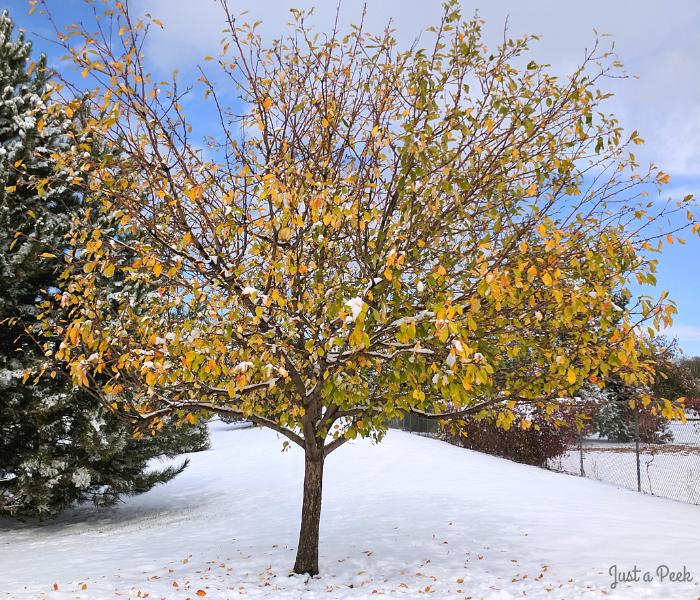 Colorado snowing in fall