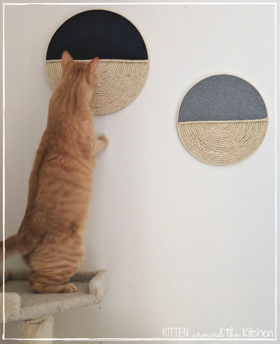 Diy Cat Round Wall Hanging Scratching Post Cat Tree 6